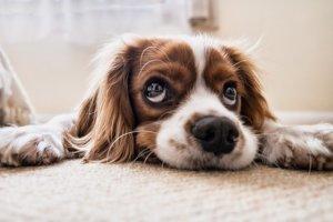 Dárek pro psa