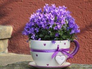 Květina je hezký dárek pro maminku